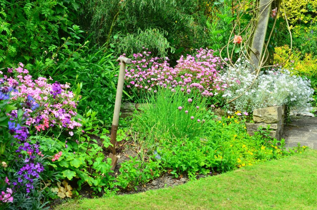 Overly Crowded Garden | Landscape Improvements