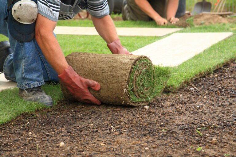 Roll of Sod for installation