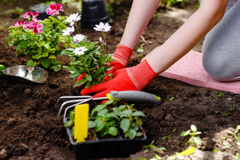 Plant Installation | Landscape Improvements