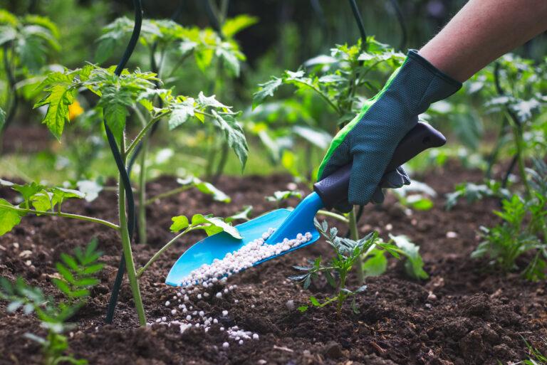 Putting Fertilizer On Plants