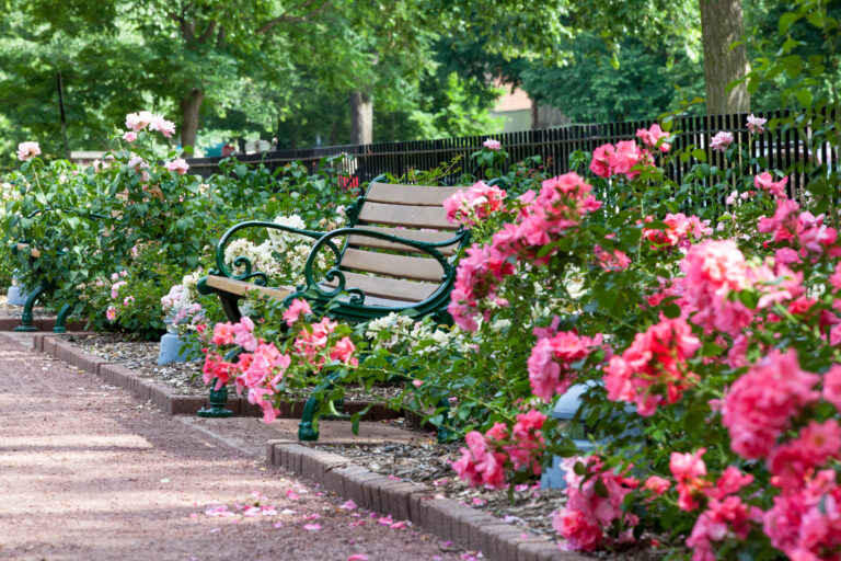 Park Bench Surrounded By Flowers