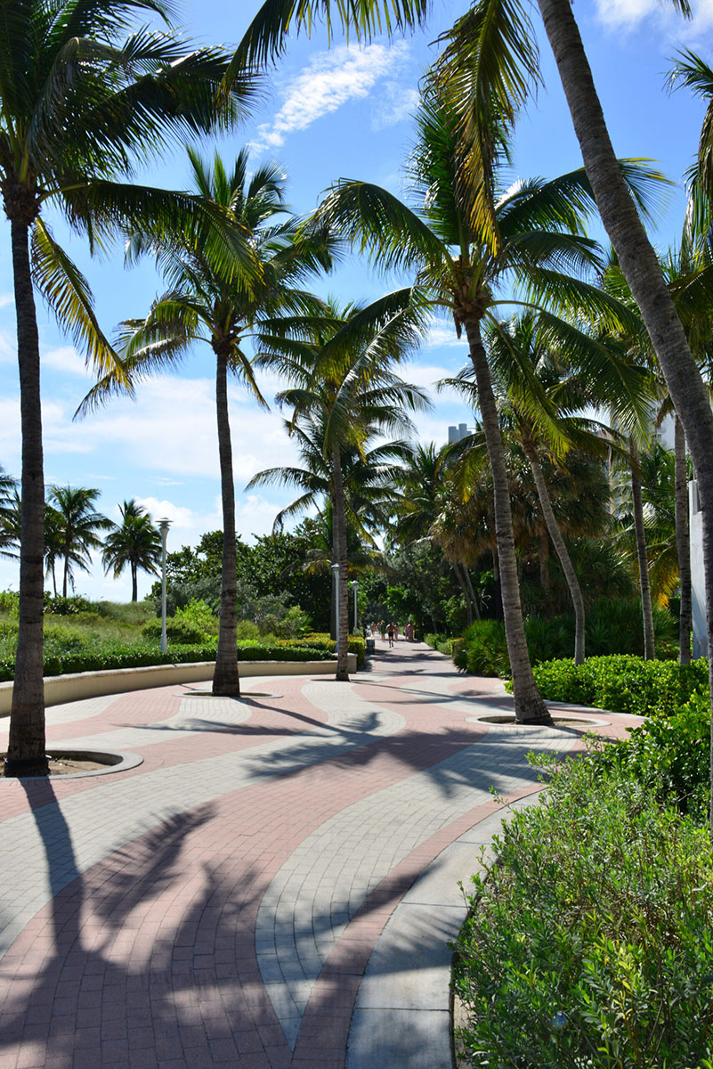 Winter Park Palm Trees