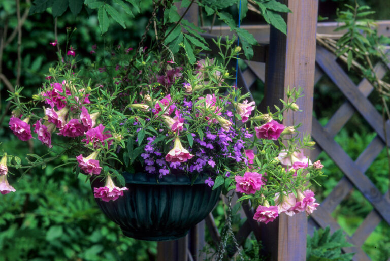 Purple Flowers For Container Gardening