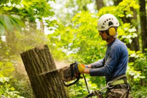 Emergency Tree Removal   Landscape Improvements