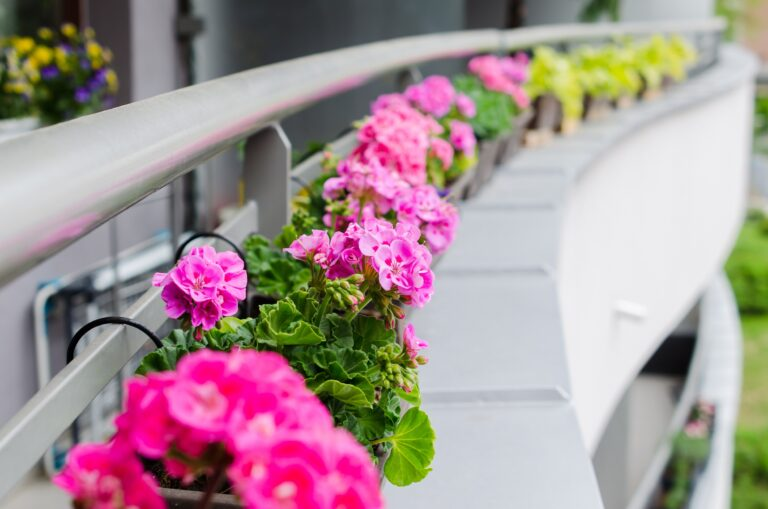 Pink Flowers On A Building Wall