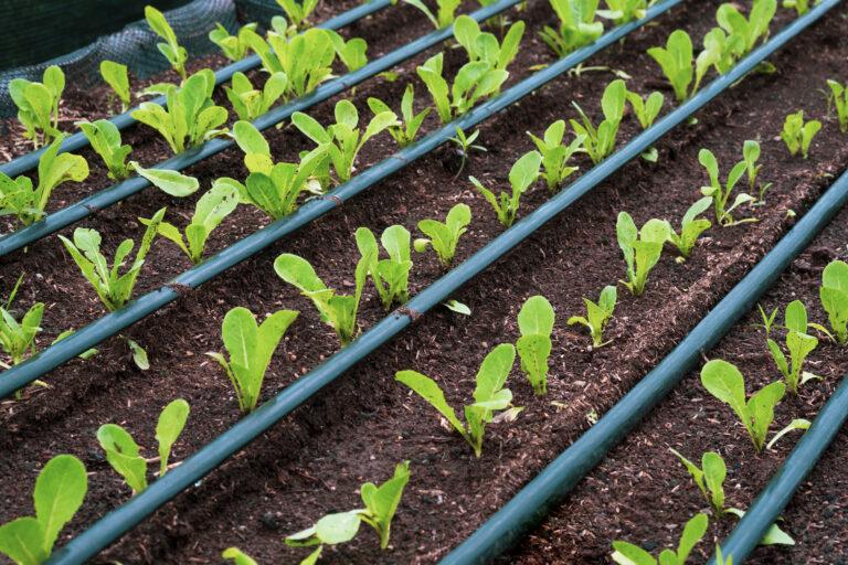 Landscape Irrigation   Landscape Improvements