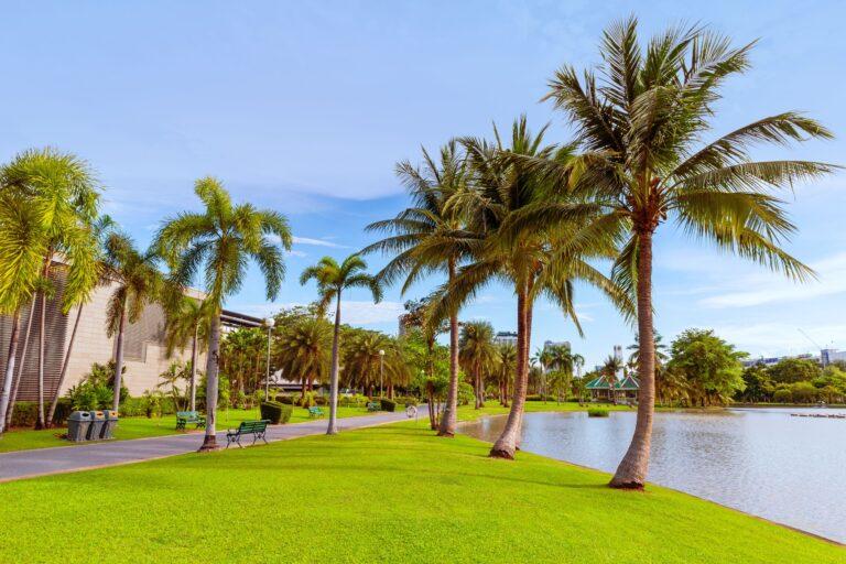 Arbor Care Palm Landscape | Landscape Improvements