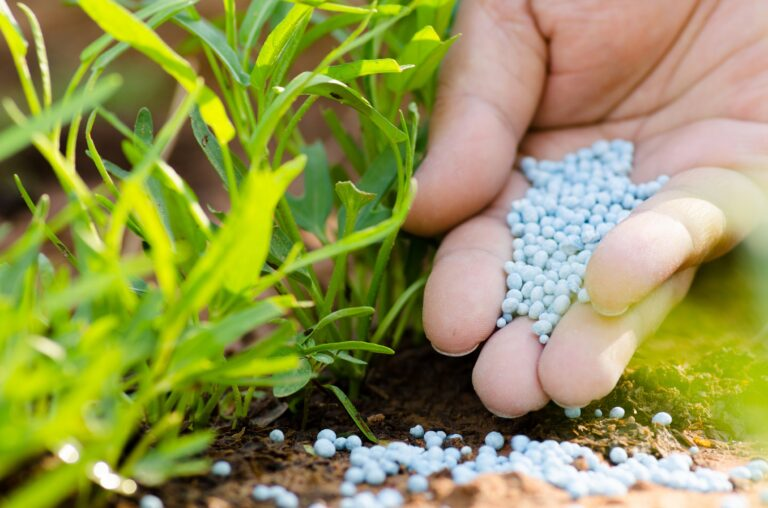 Putting Fertilizer On New Plants