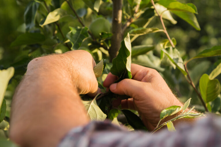 Arbor Care Tree Service | Landscape Improvements
