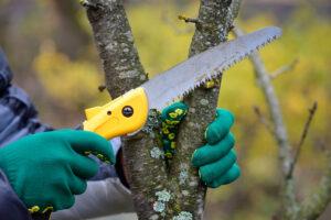 Arbor Care Tree Service   Landscape Improvements