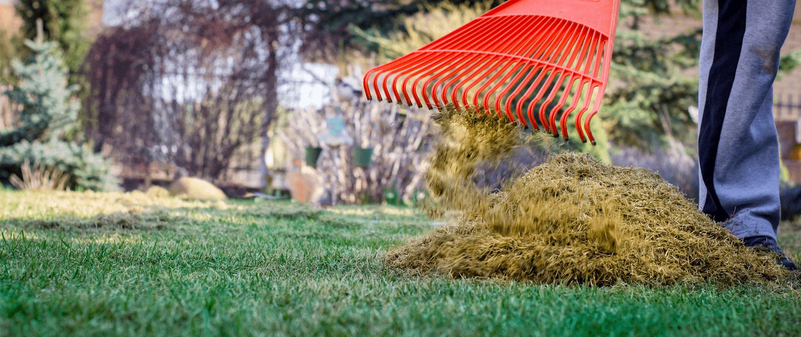 Dethatch your lawn | Landscape Improvements