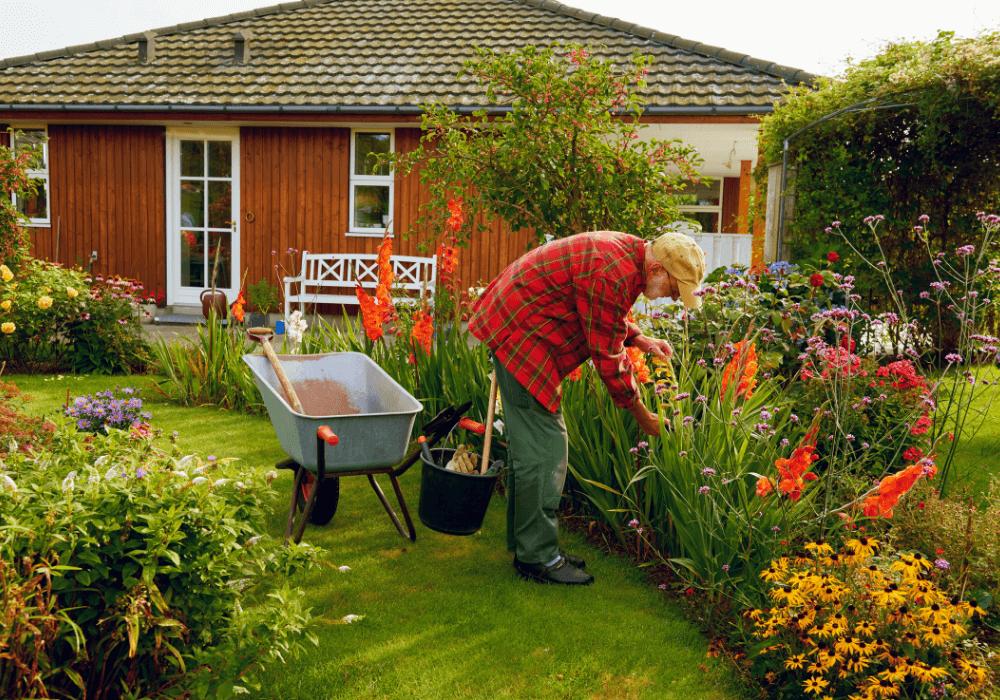 Taking out dead plants | Landscape Improvements