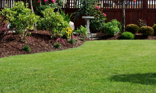 Garden With Lawn and Mulch Dressing