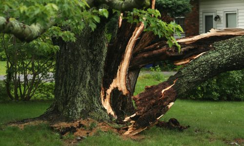 Tree Trunk Damage After Storm