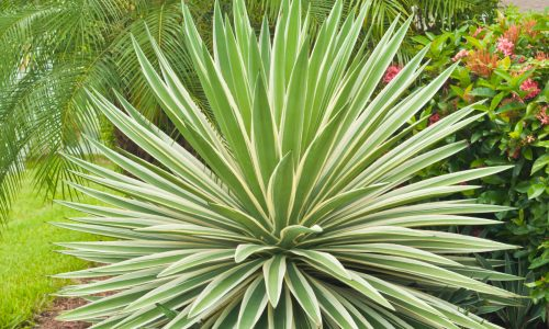 Dr. Philipps Plant